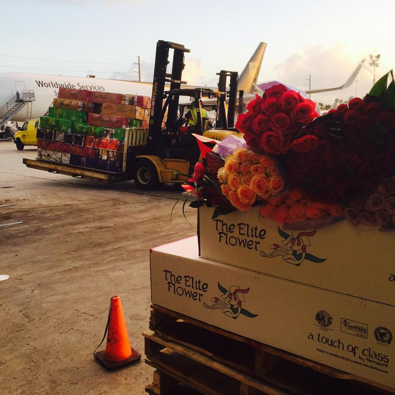 Colombian roses being unloaded for Valentine's Day this week at a UPS facility at Miami International Airport.