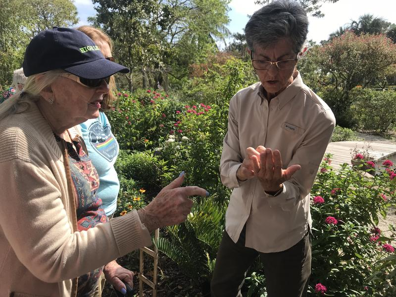 Participants in the Everglades conservation class examined a butterfly that a master gardener rescued from a spiderweb in Mounts Botanical Garden.