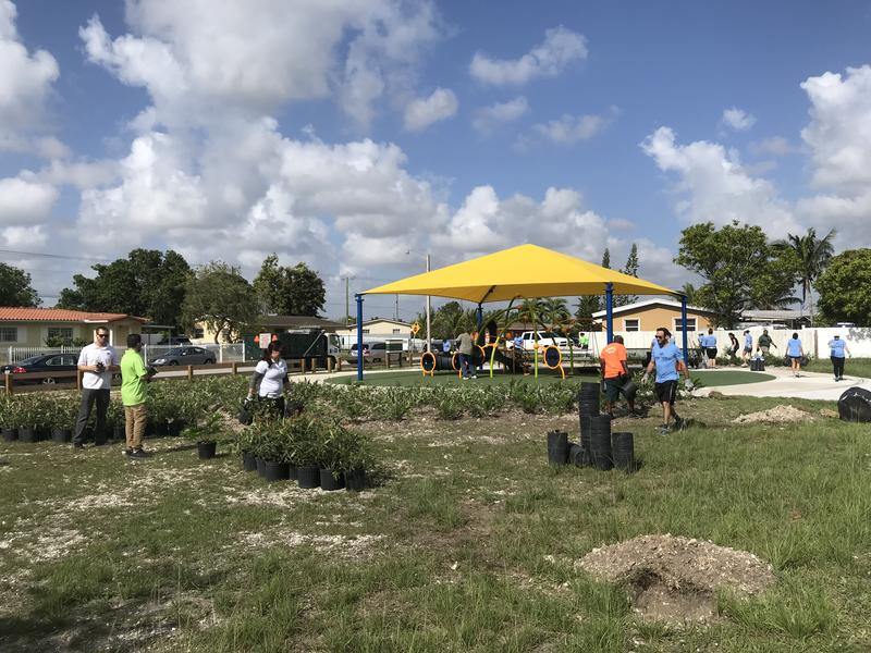 Volunteers from Bacardi worked with Miami-Dade County employees and the non-profit American Forests to plant trees in Losner Park in unincorporated Miami-Dade.