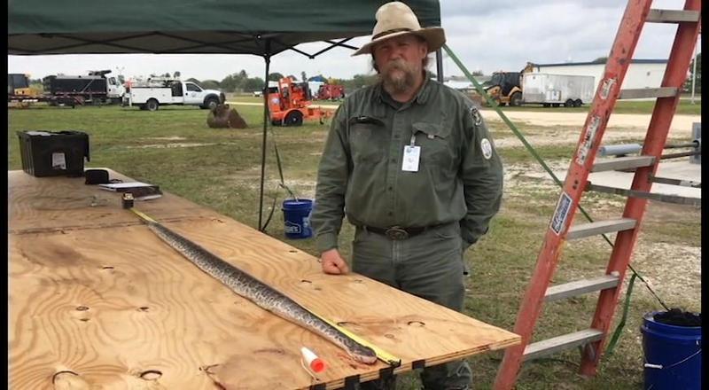 Tom Rahill is a python hunter for the Python Elimination Program.