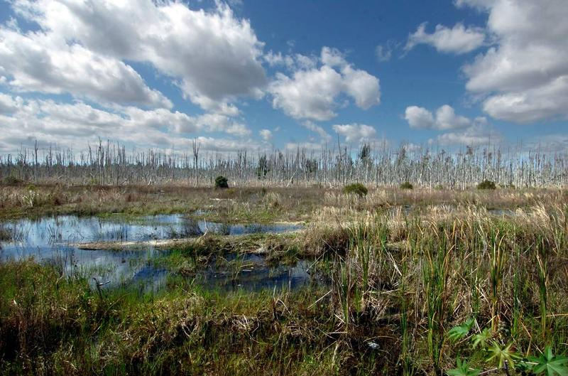 Wetlands Tamiami Trail Extension Expressway Kendall Wins Key Vote