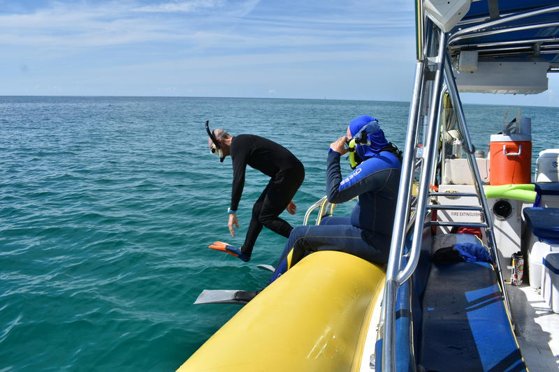 A scientist jumps into the waters of Biscayne Bay during the expedition.