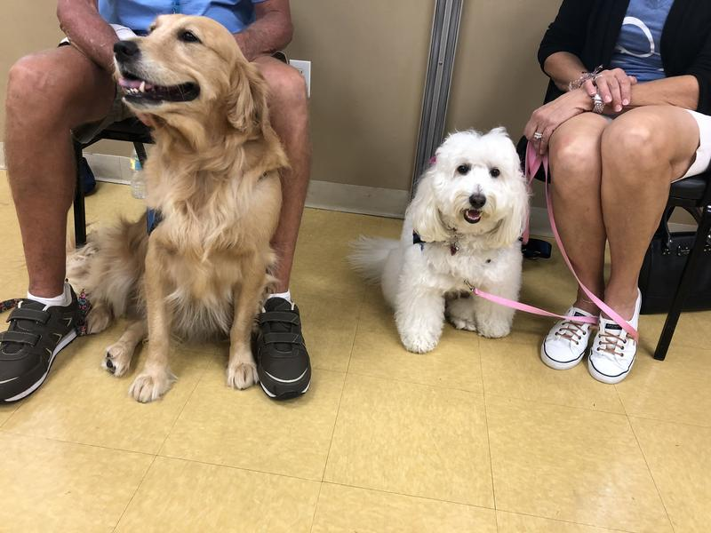 Golden retreiver Shelby and golden doodle Jesse have helped sooth feelings of anxiety and panic for student survivors of the Feb. 14 shooting. Therapy dogs are back at Douglas this school year.