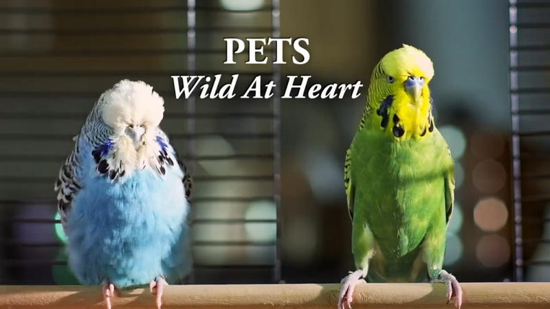 Pets: Wild At Heart - Secretive Creatures