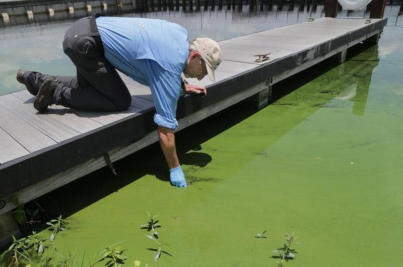 ohn Cassani, director at Calusa Waterkeeper, takes a water sample June 27, 2018, at W.P. Franklin Lock and Dam park, where a deepening algae bloom could be seen along the canal that is affecting waterways around Lake Okeechobee.