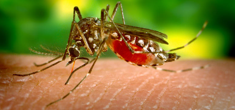 The study analyzed methods of mosquito control that were deployed when the first case of locally transmitted Zika was reported in South Florida in 2016