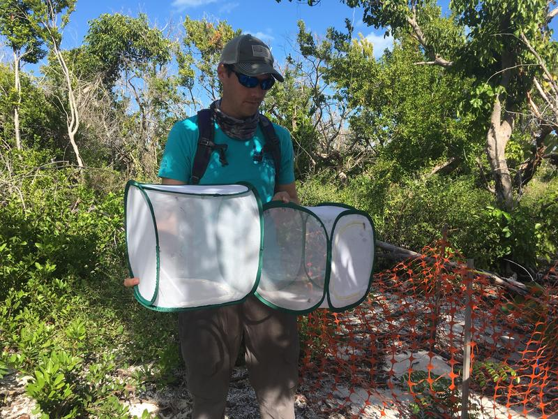 Taylor Hunt is a biologist working on the Miami Blue butterfly release project.