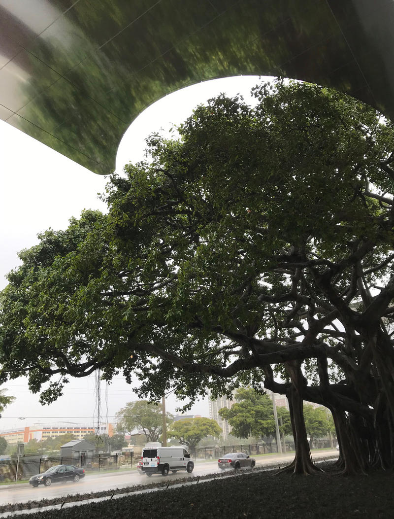 """The 80 years-old banyan tree at the new entrance is considered by the designers as """"the soul"""" of the new Museum building."""