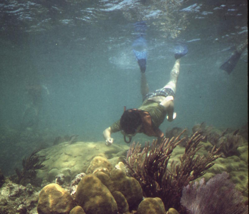 A snorkeler visits the coral reef off the Florida Keys.
