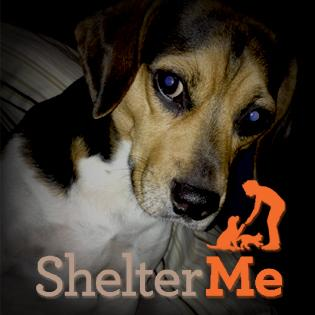 """Shelter Me"" Animal Documentary on WLRN-TV17"