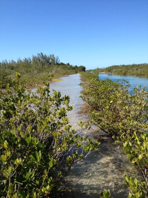 Climate Change? James' walking trail in the Keys is frequently flooded these days.
