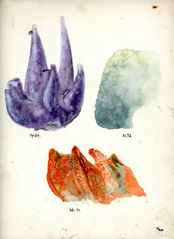 Sp.69, Sp.71, Sp. 72, 1924, watercolor on paper 11 3/4 x 9 inches