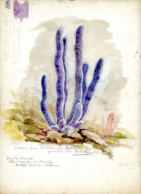 Tube Sketch no. 2, 1924, watercolor on paper 9 x 11 3/4 inches