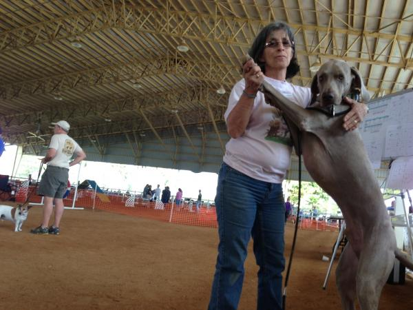 It takes two to tango, typically one is not a Weimaraner. Carol Clark with six-year-old Boo.