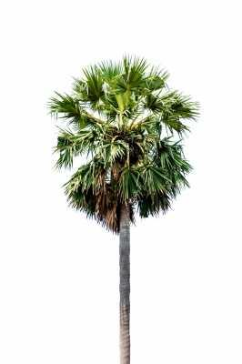 This palm tree is ready to rock.