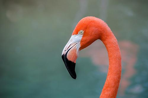 The flamingo perfectly represents Florida, according to birder Nicholas Lund.