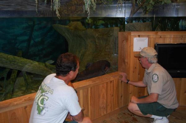 Murray Stanford (left) and Kelly Gestring say goodbye to Igor, the deformed Pacu fish. Igor was their adopted pet for more 35 years at the former Florida Fish and Wildlife Conservation Commission Non-Native Research lab.