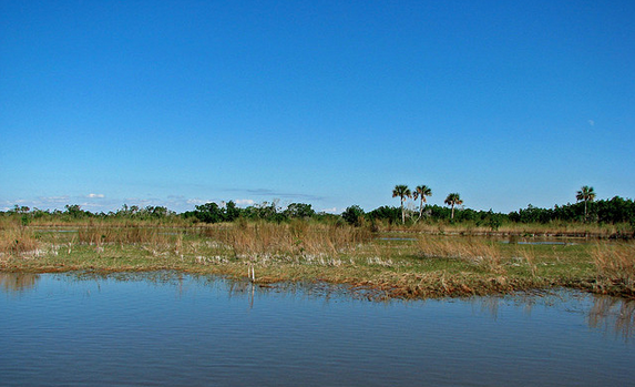 The Florida Everglades is considered a national treasure.