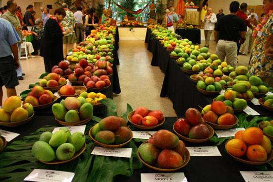 Display of mangoes from around the world at 2011 International Mango Festival. Watch a video from the festival (below).