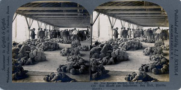 This stereoview shows the island's sponge market.