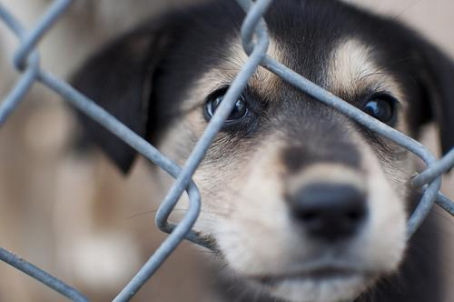 Broward County's animal shelter is making sure you can get a good deal on more than toys and TVs.