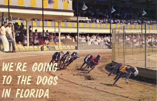 GREYHOUND HEY-DAY: Visible in this undated photo from Hollywood Kennel Club is something you don't see anymore: crowds coming out to watch dog racing.