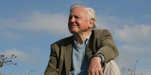 Nature: Attenborough's Life Stories