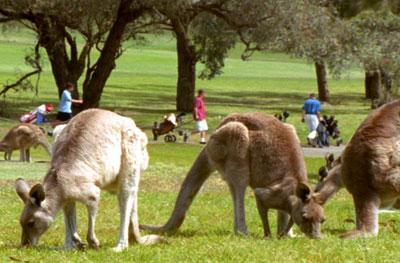 Wild Australasia: New Worlds