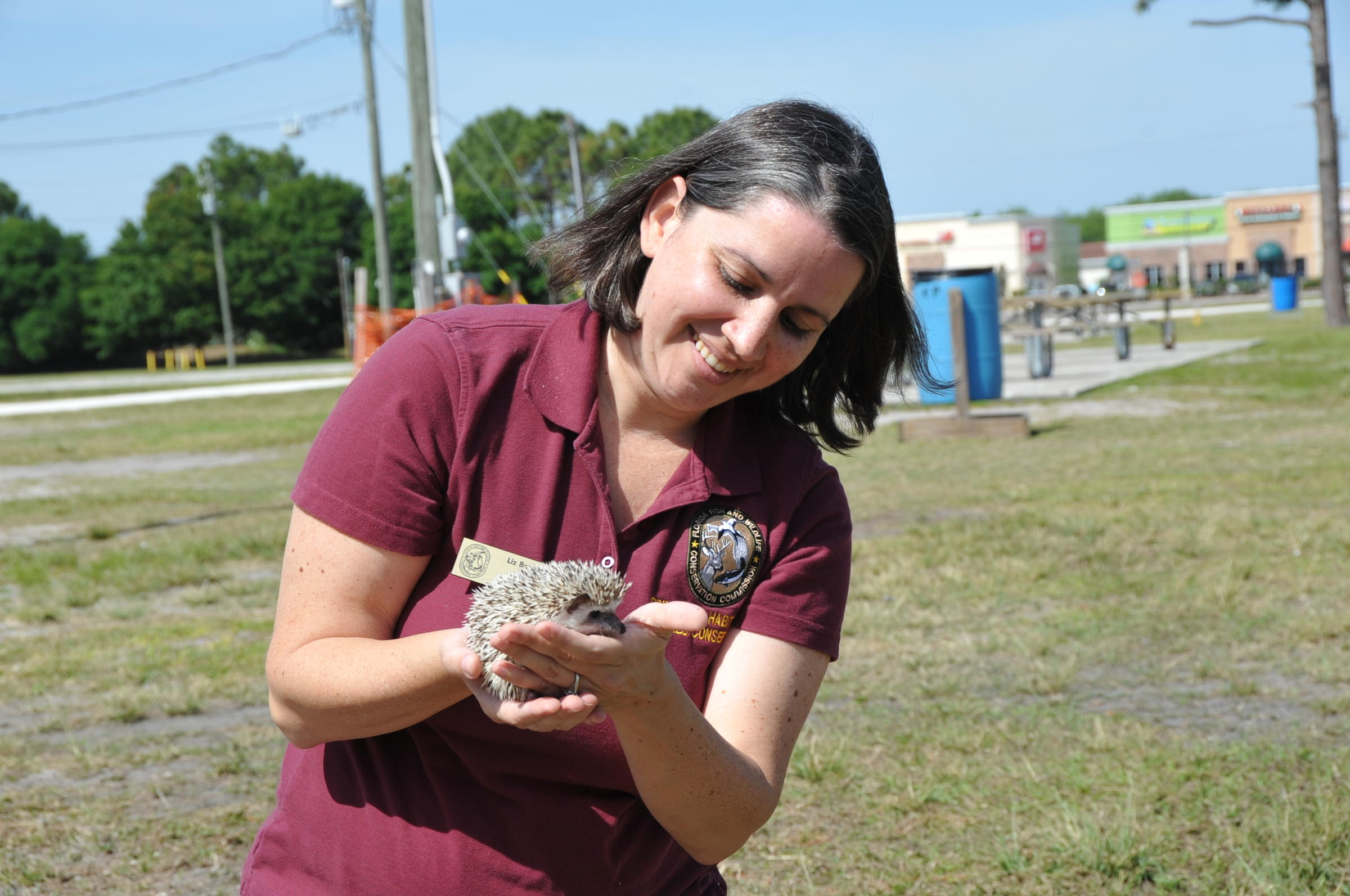 Pssst want a hedgehog florida wildlife officials seek for Florida fish and wildlife jobs