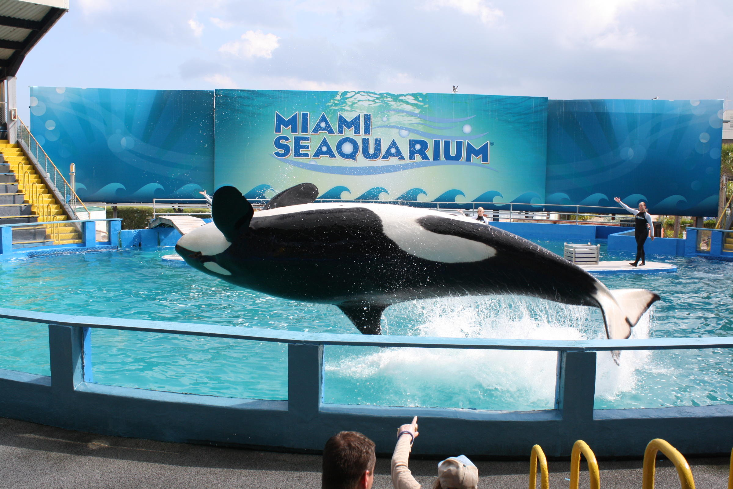 Seaquarium Protestor to Live in Bathtub for a Month | WLRN