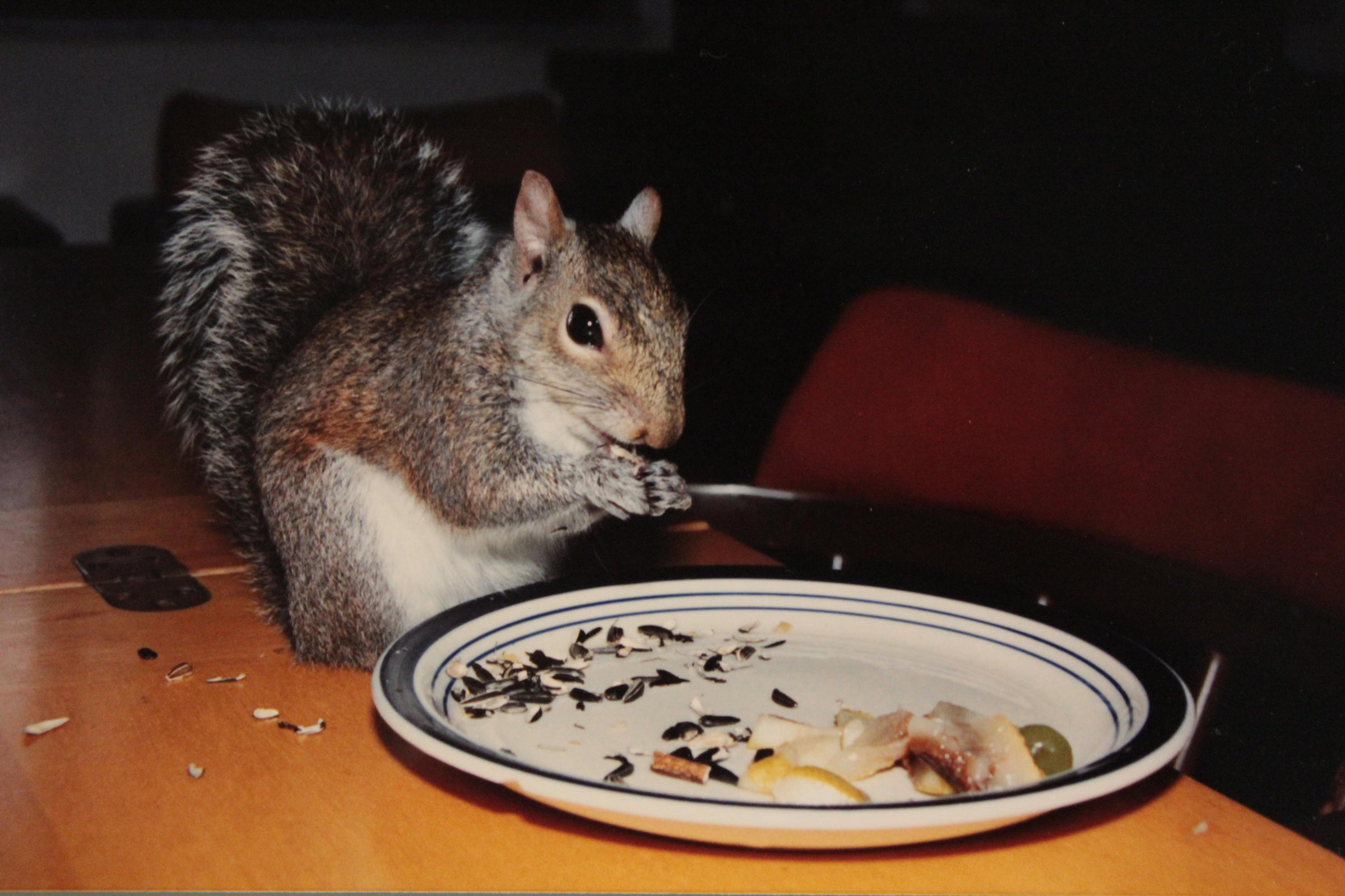 hurricane andrew 25 years later u0027even the squirrels were