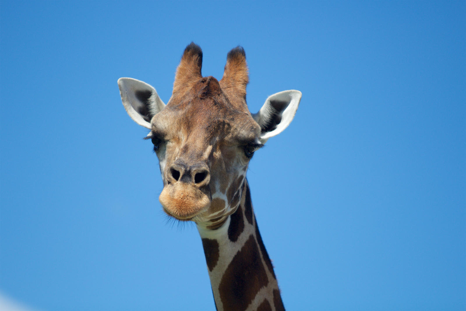 Where To Put Your Giraffe During A Hurricane? | WLRN