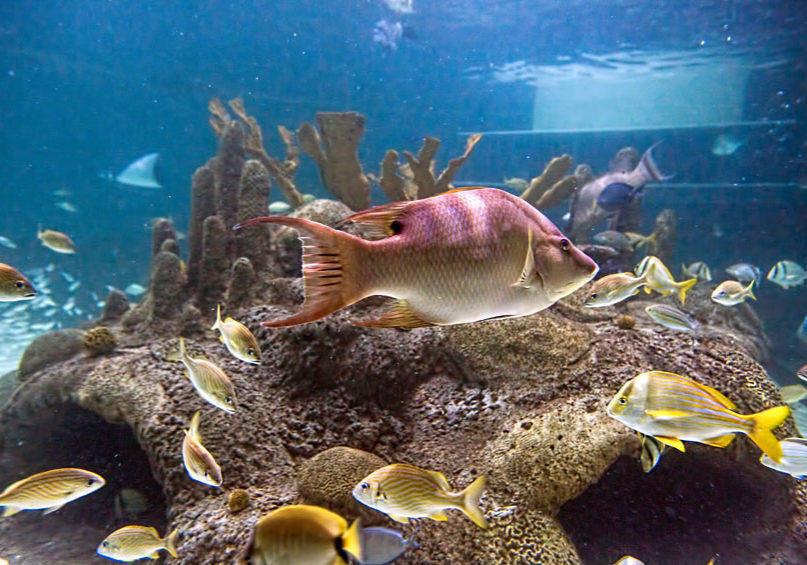 Florida Aquarium Volunteer