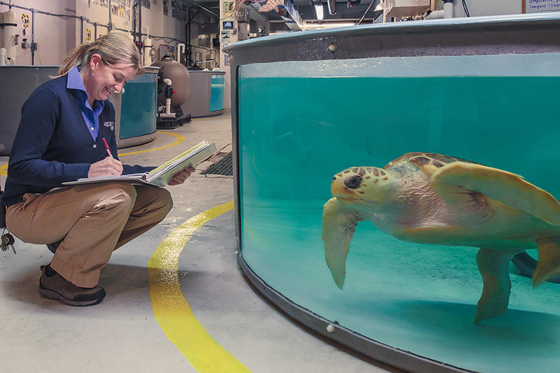 Checking the progress of a patient at the Turtle Rescue Program of the South Carolina Aquarium.
