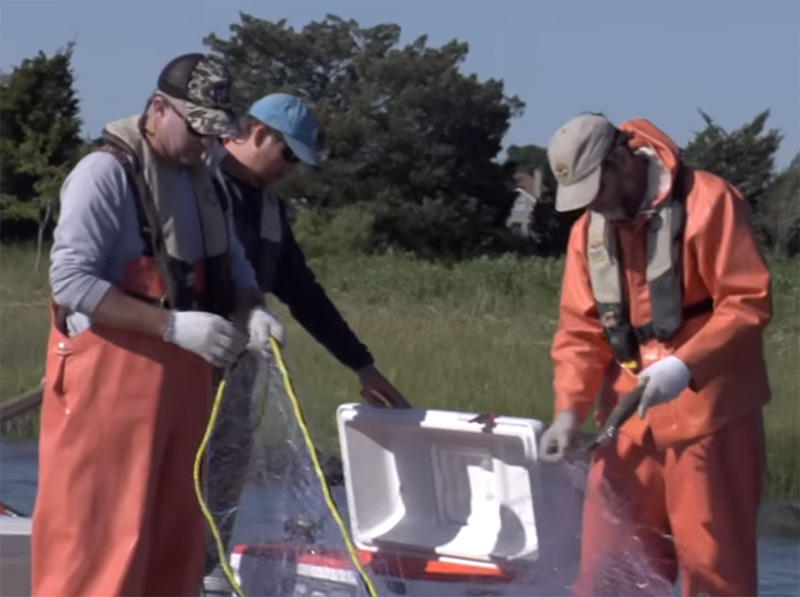 SC Dept. of Natural Resources teams are surveying fish populations in estuaries.