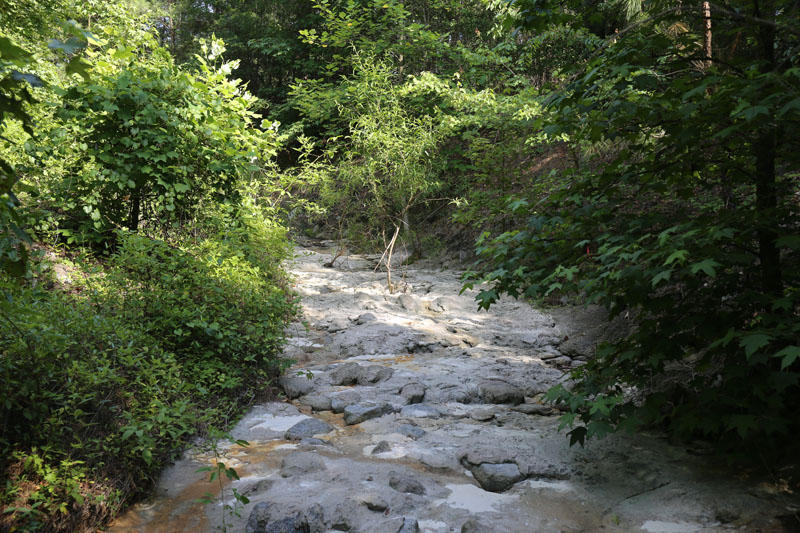 The berms in the picture above stand almost 30 ft. at points, and disconnect the creek from its historic flood plain. Ordinarily, water would break the bank and go into the flood plain. In its current form, water is forced down the channel where it picks