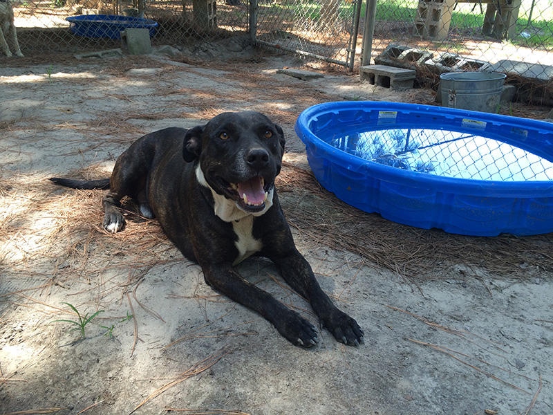 Big Boy relaxes by a pool. He has since found a home. Until adopted, homeless dogs are cared for  at MAMAS in Bamberg.