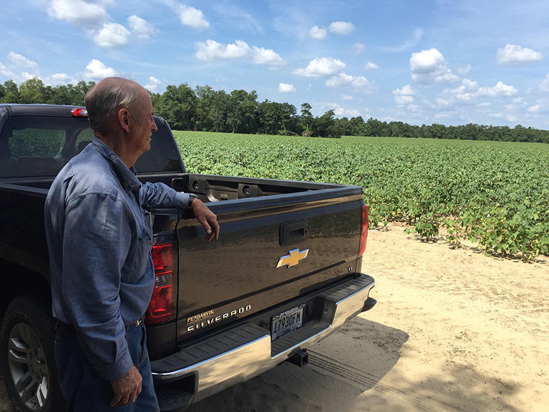 Aiken County cotton farmer Carl Brown overlooks one of his field.
