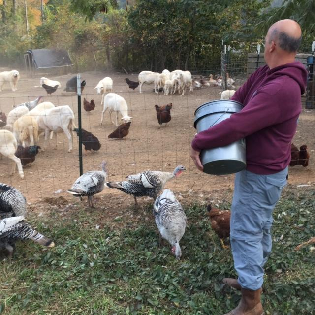 Joe Jones tends his sheep, turkeys and chickens on his Blythewood farm.