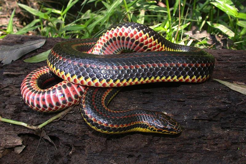 A Rainbow Snake