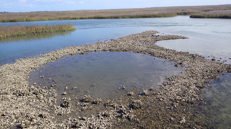 Clemson researchers are studying the role wetlands have in exporting carbon during floods and severe weather events. Shown here are wetlands of the Hobcaw Barony, home to Clemson's Belle W. Baruch Institute.