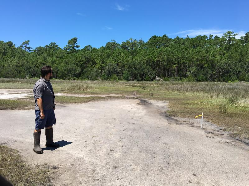 Dr. Tom O'Halloran looks out from the salt marsh to his team's research plot on the Hobcaw Barony.