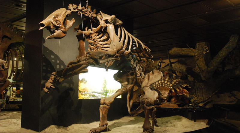 Giant ground sloths, relatives of the living South American tree sloths, lived across much of North America.