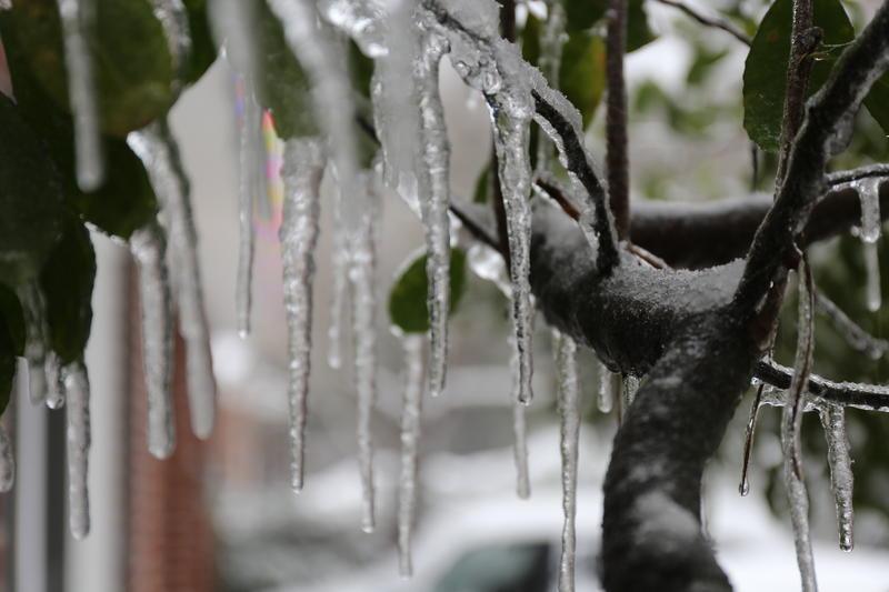 Ice on tree limbs