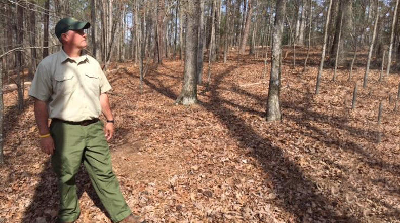 Forester Chase Folk looks over a section of Sumter National Forest in Newberry County.