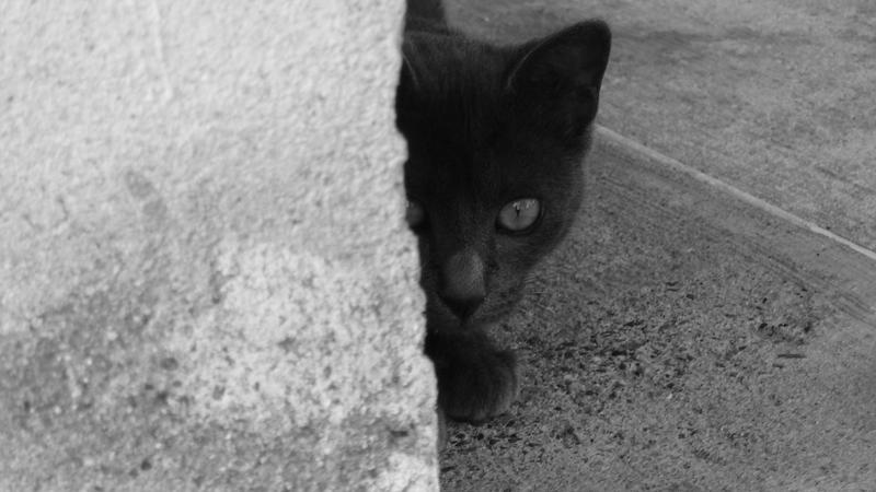 If a black cat crosses your path on Friday the 13th - or any other day - don't worry, says USC sociology professor Barry Markovsky. There is no truth to any superstitions about Friday the 13th, black cats or any other traditional