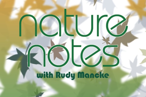 NatureNotes logo
