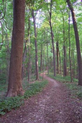 Kentucky Coffee Tree trail offers hikers a gradual incline for hiking at Audubon State Park in Henderson (KY).