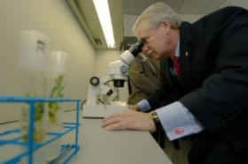 State Sen. Bill Ketron, R-Murfreesboro, views ginseng samples through a microscope in the Tennessee Center for Botanical Medicine Research in MTSU's Davis Science Building Nov. 13.