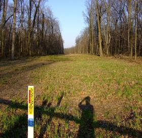 A buried pipeline's linear clear-cut through woods. This pipeline is in Ohio.